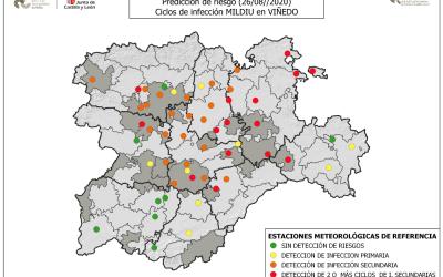 Vigilancia especial de los viñedos por mildiu