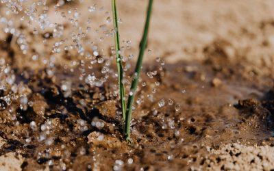 Convocadas las ayudas de agroambiente y clima y agricultura ecológica para la campaña 2020/2021 y/o año 2021