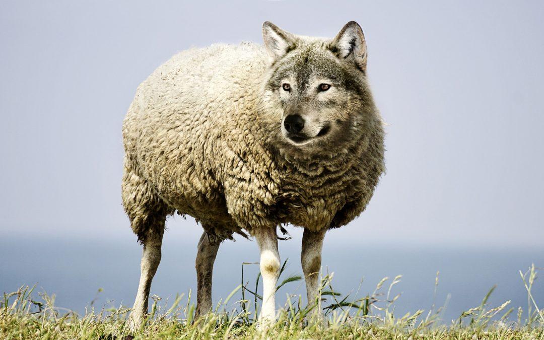 """Concentración en Burgos: """"Lobos en expansión, ganaderos en extinción"""""""