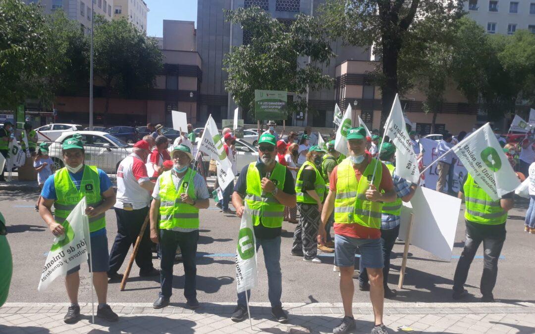 UCCL se manifiesta en contra de la inclusión del lobo en el LESPRE